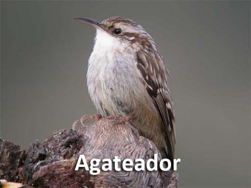 agateador_montejosierra