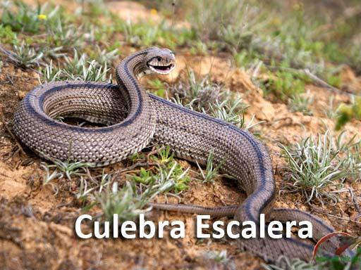 culebra_escalera_montejosierra
