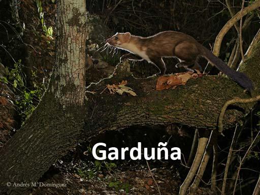 garduna_montejosierra