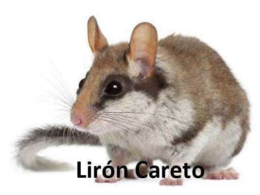 lironcareto_montejosierra