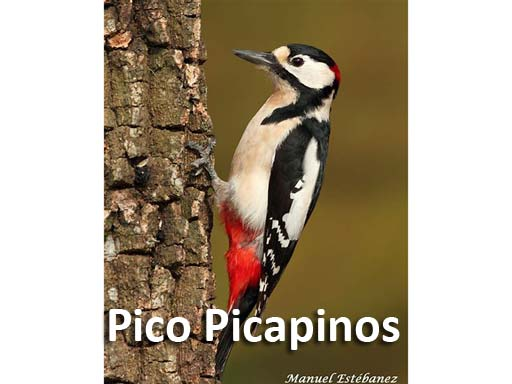 pico_picapinos_montejosierra